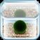 まりも - 水槽で小さな マリモ を育てることができる癒しの育成アプリ